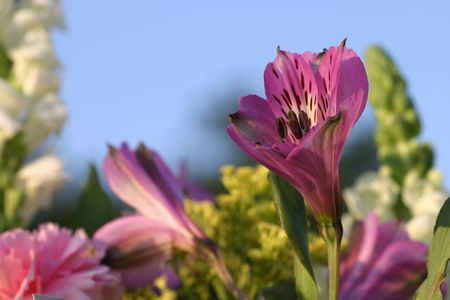 A colorful garden of flowers (limited DOF with focus on purple lily on right) - Room For Text