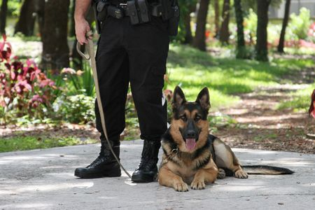 flashlights: A police officer and his police dog. Stock Photo