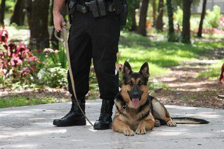 perro policia: Un oficial de polic�a y su perro polic�a.  Foto de archivo