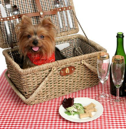 Two adorable yorkies on a picnic with wine and dog bisquits Stock Photo - 484118