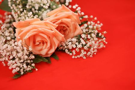 A bouquet of pink roses and babys breath on a bright red background.  Room for text. photo
