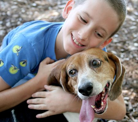 hounds: A beagle enjoying a hug from an adorable little boy.  Focus on dogs face.
