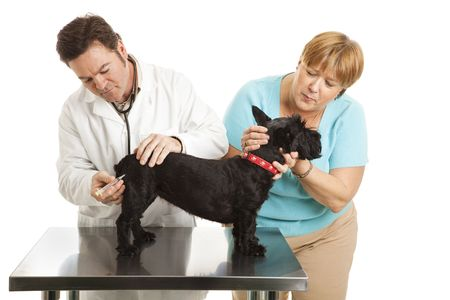 Doting dog owner comforts her Scotty while the vet gives it a shot.  Isolated on white. photo