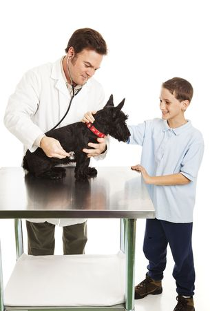 Little boy pets his dog as the veterinarian examines it.  Isolated on white. photo