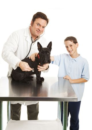Veterinarian listens to dogs heart beat while young owner looks on.  White background.  photo