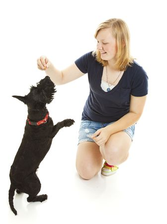 Teenage girl teaching her Scotty dog to do a trick.  Isolated on white.