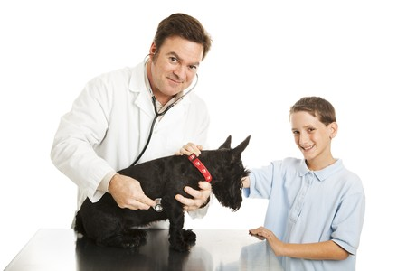 Little boy brings his dog to the vet for a checkup.  Isolated on white. photo