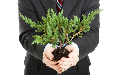 hands holding tree: Businessman, unafraid to get his hands dirty, holding a bonsai tree.  Symbolizes the union of ecology and business.