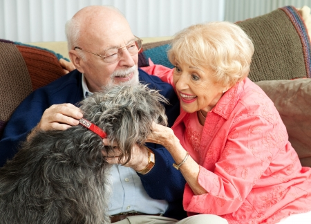 pet therapy: Senior couple at home on the couch, playing with their adorable mixed breed dog.   Stock Photo