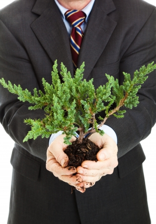 Closeup of businessman holding a bonsai tree in his hands.   photo
