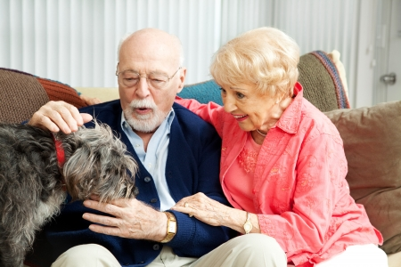 Senior couple at home with their adorable scruffy little dog.   photo