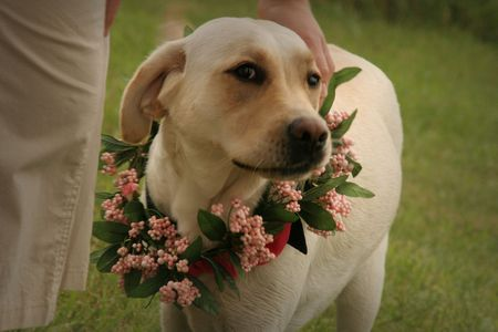 flower dog photo