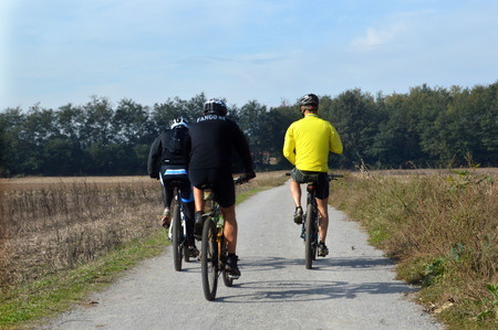 forest management: cyclists on the bike path through the woods