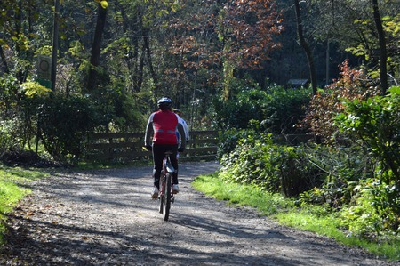 wooded path: cyclists on the bike path through the woods