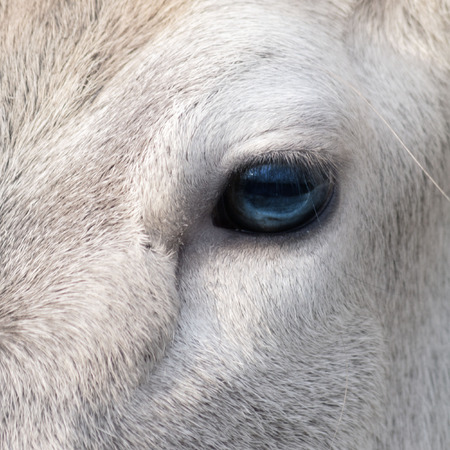 in particular: particular of an eye equine