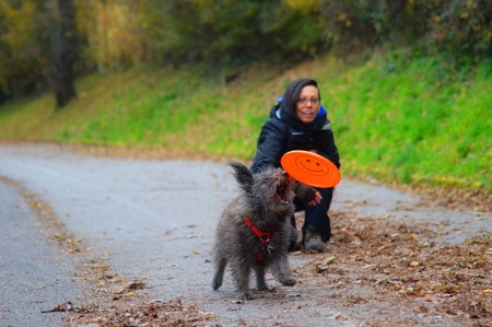 platillo volador: perro y niña jugando con un platillo volador