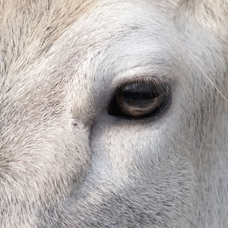 particular: particular of an eye equine