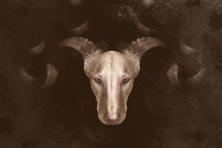 photomontage: photomontage, Podenco dog demon with horns