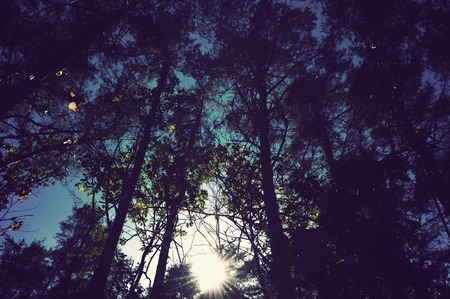 goblins: forest from below with sky and sunlight