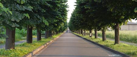 treelined: tree-lined street with asphalt road