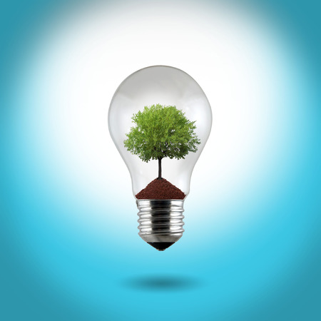 light bulb with green tree on the blue background