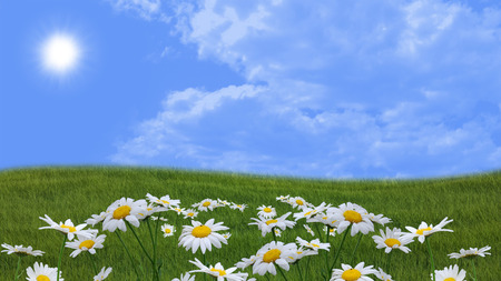 flowery meadow with daisies and blue skies