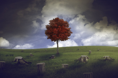 isolation: landscape with meadow full of stumps and a red tree on gray sky