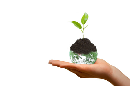 hand holding up the planet earth with seedling on white background