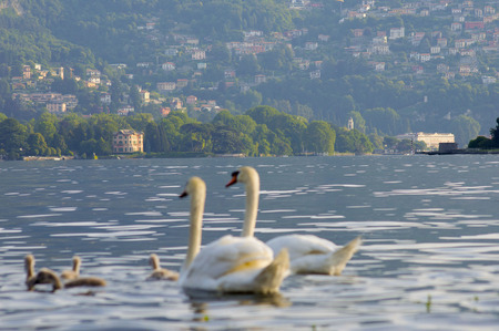 second floor: Panorama of Lake Como with blurry swans in the foreground Stock Photo
