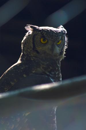 owl posing on a branch 免版税图像