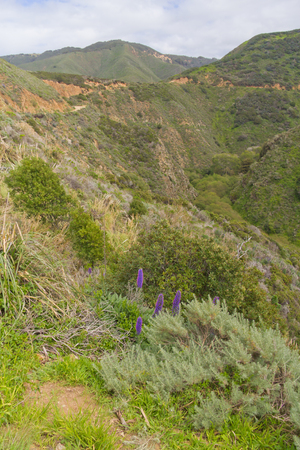 carmel: Mountain, green plants, flowers and rocks  at Garrapata State Park, Carmel, California Stock Photo