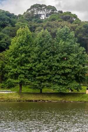 to paula: Trees around Sao Bernardo lake, Sao Francisco de Paula, Rio Grande do Sul, Brazil