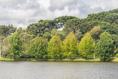 Trees around Sao Bernardo lake, Sao Francisco de Paula, Rio Grande do Sul, Brazil