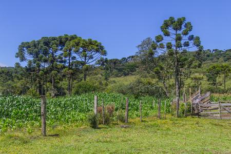 Iron fence at Farm in Itaimbezinho Canyon, Cambara do Sul, Rio Grande do Sul, Brazil