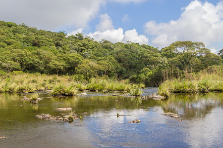 Stream in a forest in Cambara do Sul, Rio Grande do Sul, Brazil