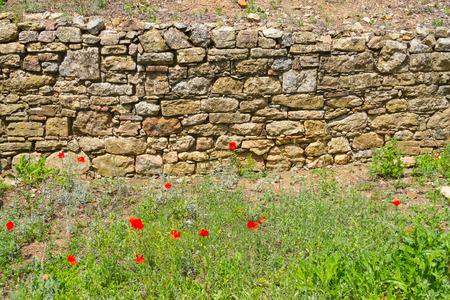 alentejo: Common poppy flower and stone wall in Santiago do Cacem, Alentejo, Portugal