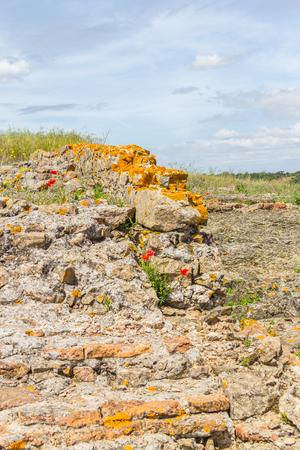 alentejo: orange lichen on rocks in Santiago do Cacem, Alentejo, Portugal