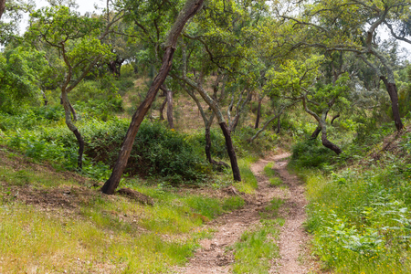 alentejo: Trail in Cork tree forest in Santiago do Cacem, Alentejo, Portugal