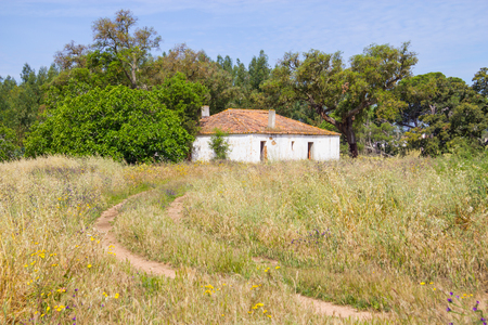 Farm house and trees in Vale Seco, Santiago do Cacem, Alentejo, Portugal
