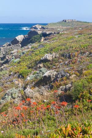 Flowers over the cliffs with Pessegueiro island in background in Porto Covo, Alentejo, Portugal Stock Photo