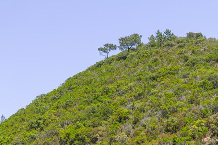 Sobreiro tree and vegetation in a mountain in Aljezur, Algarve, Portugal