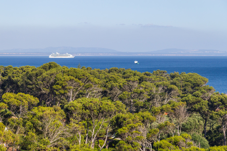 Trees and Cruise ship in Cascais, Portugal