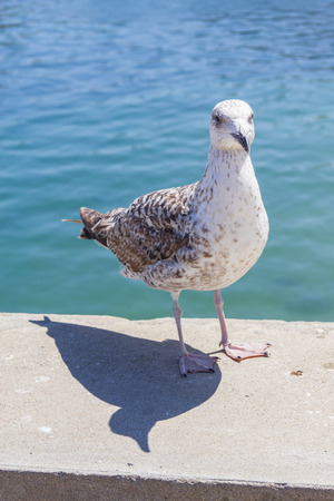 Seagull and shadow in a Marina in Cascais, Portugal Stock Photo