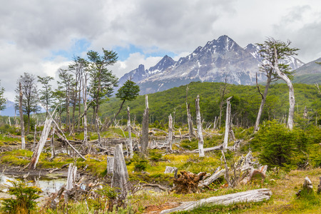 Laguna Esmeralda trail with forest and mountains, Ushuaia, Patagonia, Argentina Banco de Imagens - 95777373