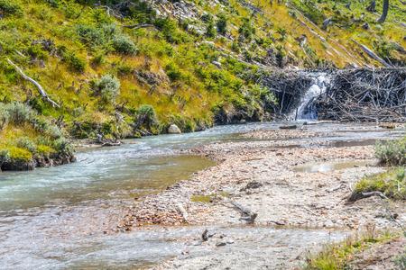 Beaver dams in Laguna Esmeralda trail, Ushuaia, Patagonia, Argentina