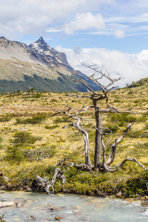 Stream and dry tree in Laguna Esmeralda trail with  mountains and vegetation, Ushuaia, Patagonia, Argentina