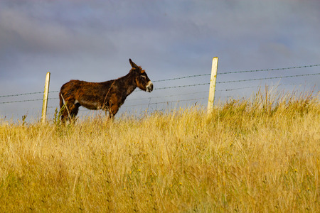 Donkey in a Farm field in Greenway route from Castlebar to Westport, Ireland 版權商用圖片