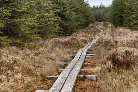 Western way trail in a bog with pine forest around, Maam Cross, Galway, Ireland