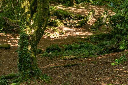 Trees and shadows in Barna woods, Barna, Galway, Ireland Banco de Imagens