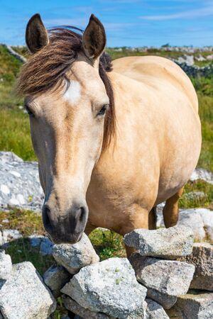 Horse portrait in Carraroe, Conemara, Galway, Ireland